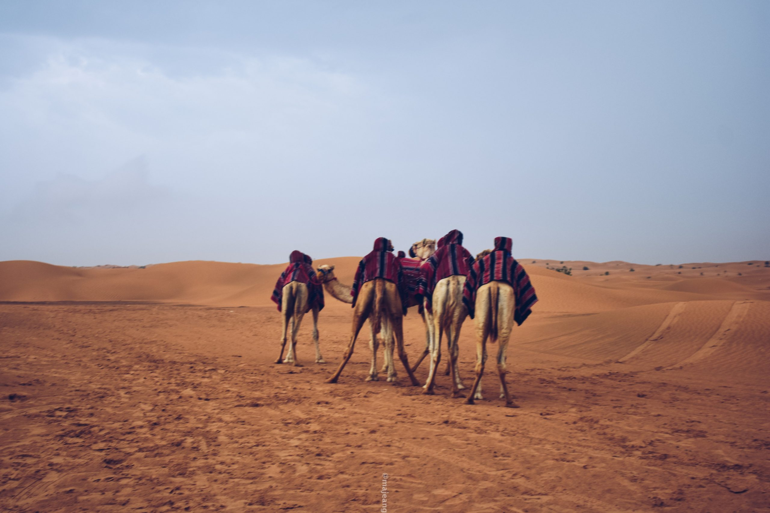 how to stay secure online whilst travelling- camels in dubai desert